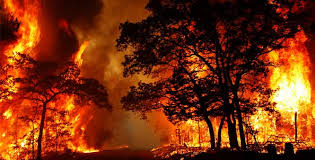 Fever in the Forest ; Fire in the Head – Comparative Essay on Forest Fires